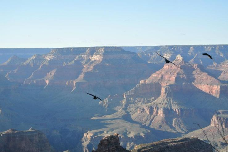 Il film che ti sei perso - Grand Canyon